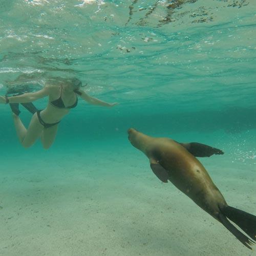 GALAPAGOS- seal snorkel diver