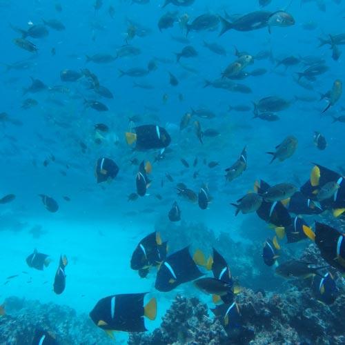GALAPAGOS-ISLANDS-BOATS-CRUISES-SNORKEL-