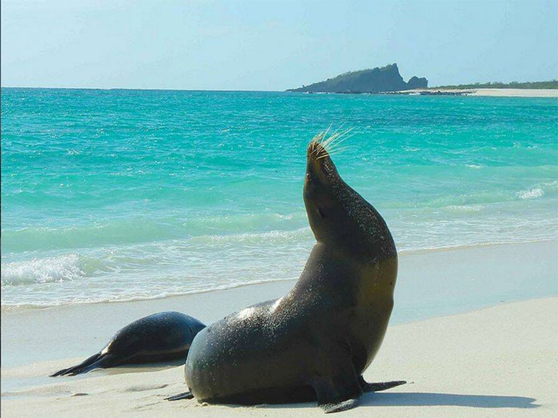 Las Bachas Galapagos Islands seal on beach