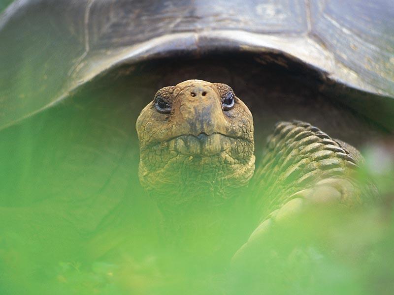 GALAPAGOS BOAT CRUISES Giant Tortoise
