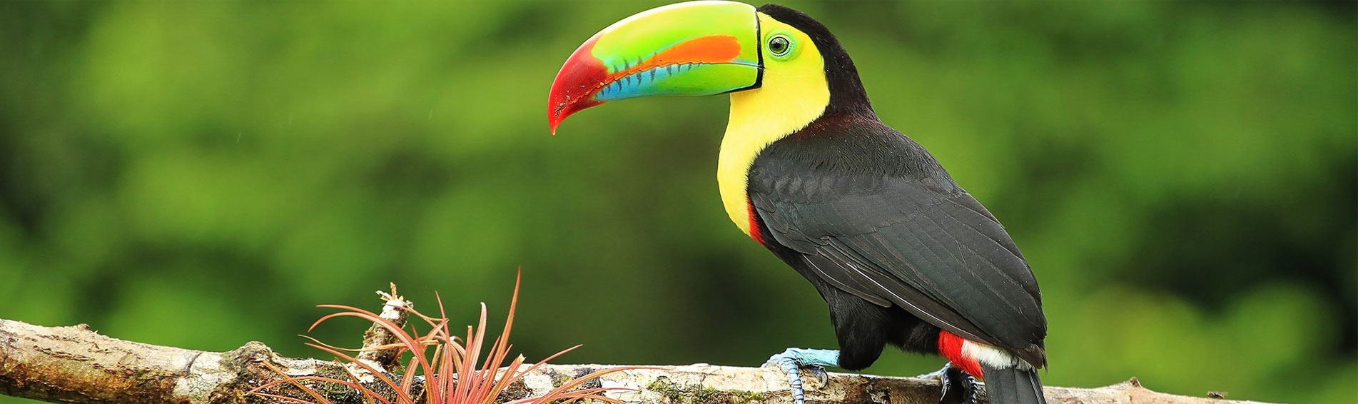 SPENDOURS OF MEXICO, CUBA & COSTA RICA travel package
