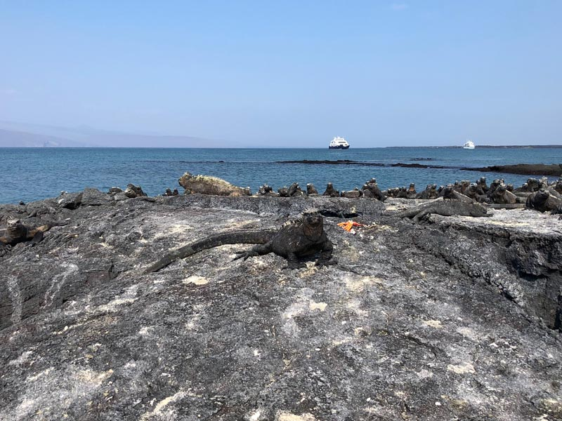Best Galapagos Cruise Prices 2021